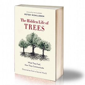 Book Cover: The Hidden Life of Trees – Peter Wohlleben