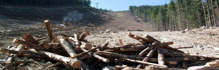"""До 22 декември имаш възможност да защитиш от изсичане вековните гори на национален парк """"Пирин"""""""